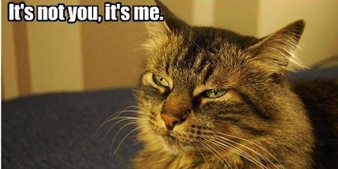 it's not you it's me cat