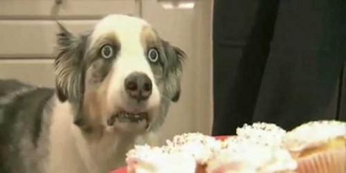Dramatic Dog