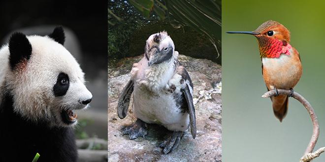 Google Panda, Penguin and Hummingbird Updates