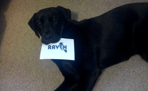 dog with raven